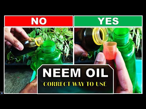 Neem oil for plants how to use