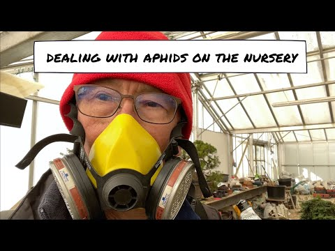 Dealing with Aphids