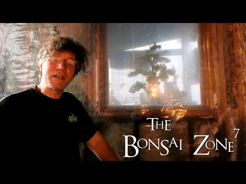 Rain Water in Winter and Work on the Plant Room, The Bonsai Zone, Dec 2020