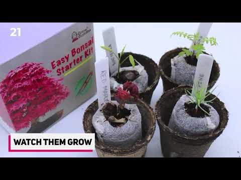 How To Grow Bonsai Tree From Seeds - 2020