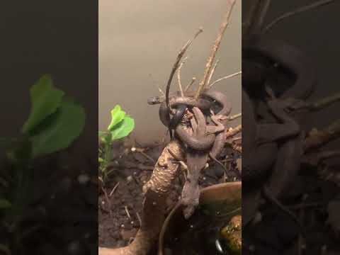 5 snakes and 2 lizards on bonsai trees