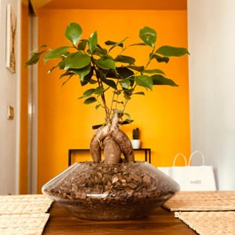 Are ants harmful to bonsai