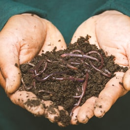 Are worms good for bonsai